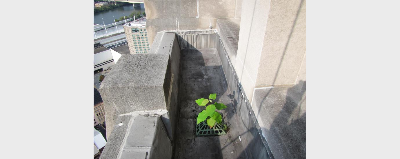 Gulf Tower Façade Assessment Using Rope Access | Walter P Moore