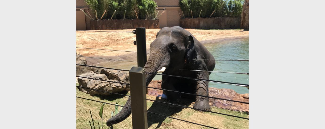Houston Zoo McNair Asian Elephant Habitat